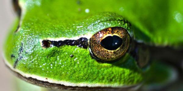 Connaissez-vous la fable de la grenouille ?